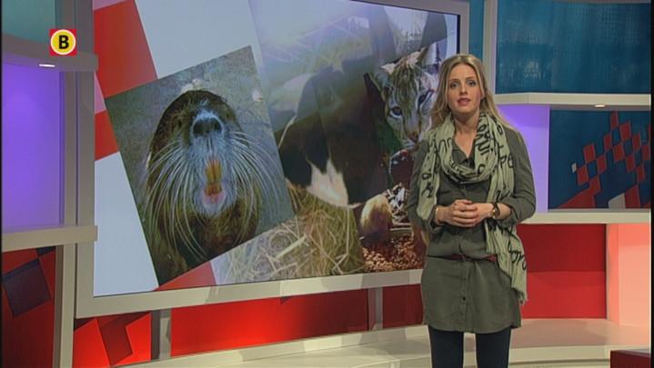 Een kijkje in de nieuwste dierentuin van Brabant, Zie-Zoo Volkel