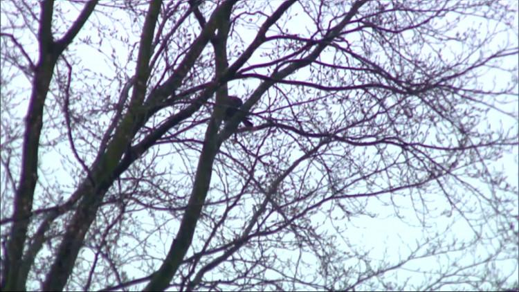 Vogelvanger probeert klauw te vangen