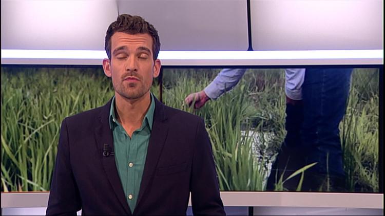 Verslaggever Tom van den Oetelaar in het rijstveld in Bosschenhoofd