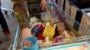 Militairen steken handen uit mouw tijdens Voedselbankactie van Omroep Brabant