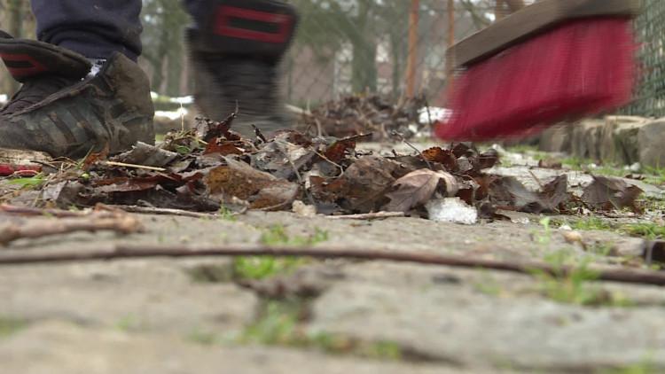 Pauw met ijsballen doodgegooid op kinderboerderij in Den Bosch