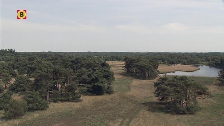 Brabantse bossen steeds vaker doelwit van criminelen