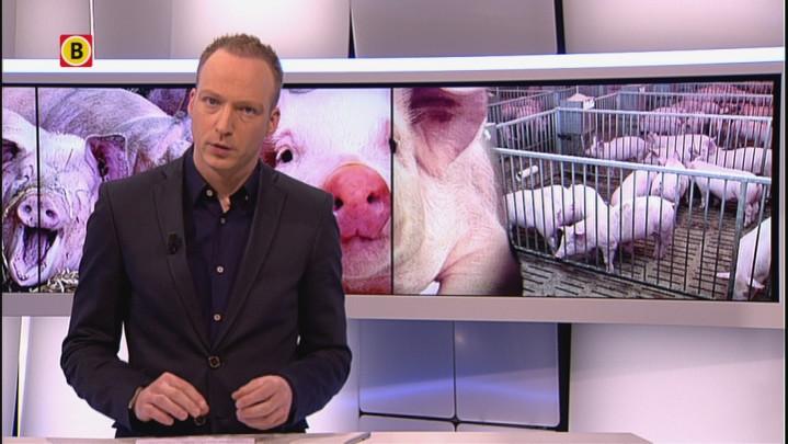 Geen onmiddellijke stop veehouderijen in Brabant