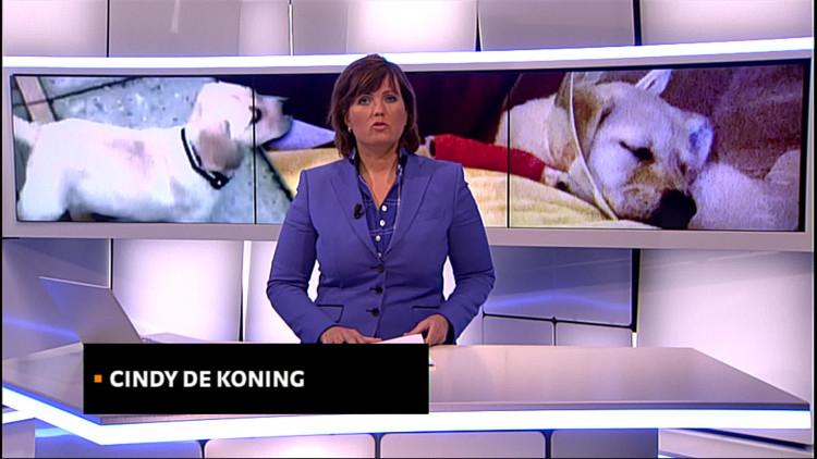 Brabant spil in internationale malafide puppyhandel; Kamerleden vragen om opheldering