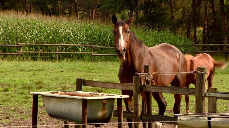 Paardenbeul Ulvenhout zou ook landelijk actief zijn