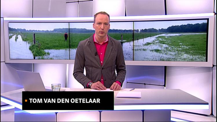 """""""Tranen in mijn ogen"""": Tweede Kamerlid CDA wil dat Brabantse boeren hulp krijgen"""