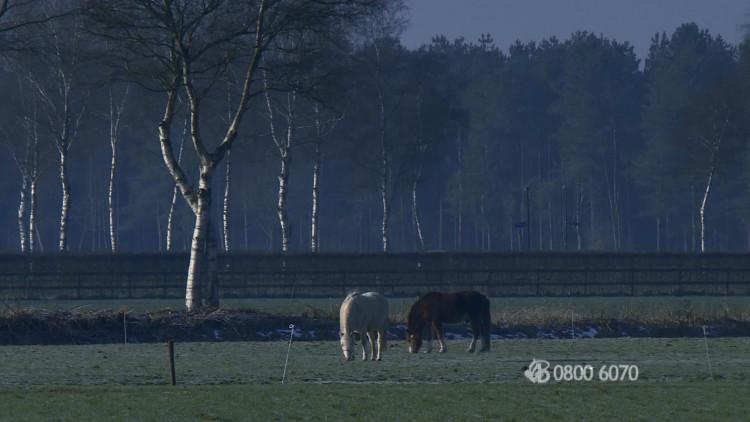 Een stel uit Loosbroek werd overvallen in hun woning