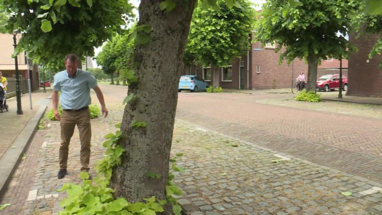 Bomenmakelaar wil zoveel mogelijk bomen behouden