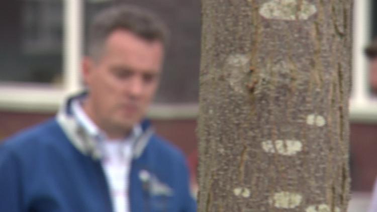 Bomenmakelaar.nl is een soort Funda maar dan voor bomen, monumentale bomen krijgen een nieuwe plek
