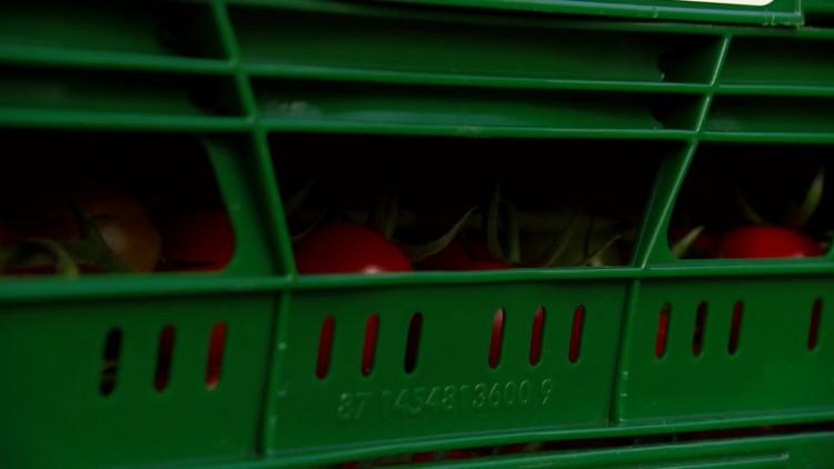 Tomatenkweker baalt van diefstal kratten: 'Een ander heeft er af te blijven'