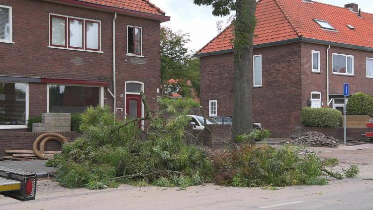 Tien bomen met spoed gekapt na spontaan omgewaaide boom in Breda