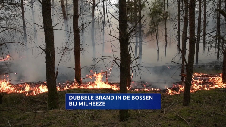 Op de Nederheide in Milheeze hebben maandag op twee plekken dicht bij elkaar flinke branden gewoed