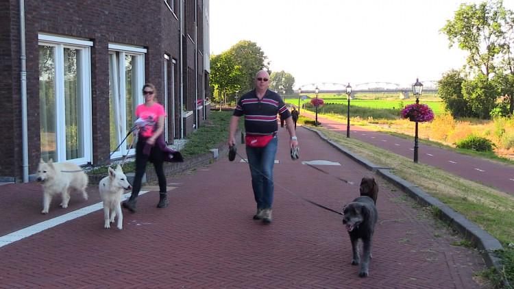 Geen wandelvierdaagse, maar een hondenvierdaagse in Grave