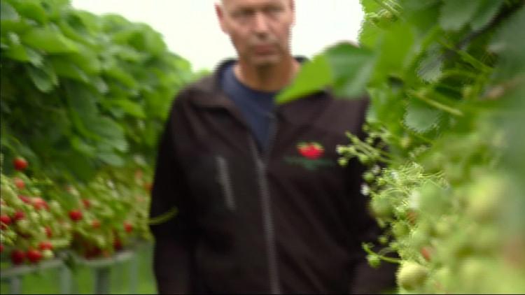 Regen komt te laat voor fruittelers: 'Hier herstellen de planten niet meer van'