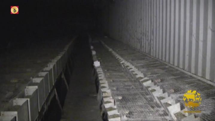 Actiegroep stelt misstanden konijnenfokkerij aan de kaak